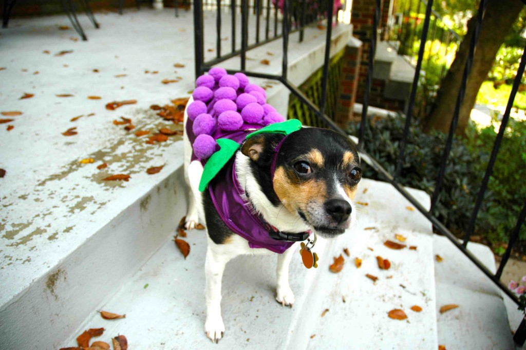 Sparkle Halloween Costume - pet safety