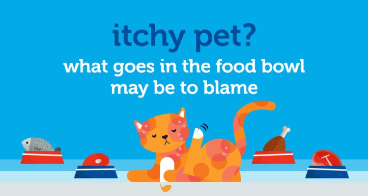 pet food allergy symptoms