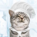 4 Pet Food Allergy Symptoms