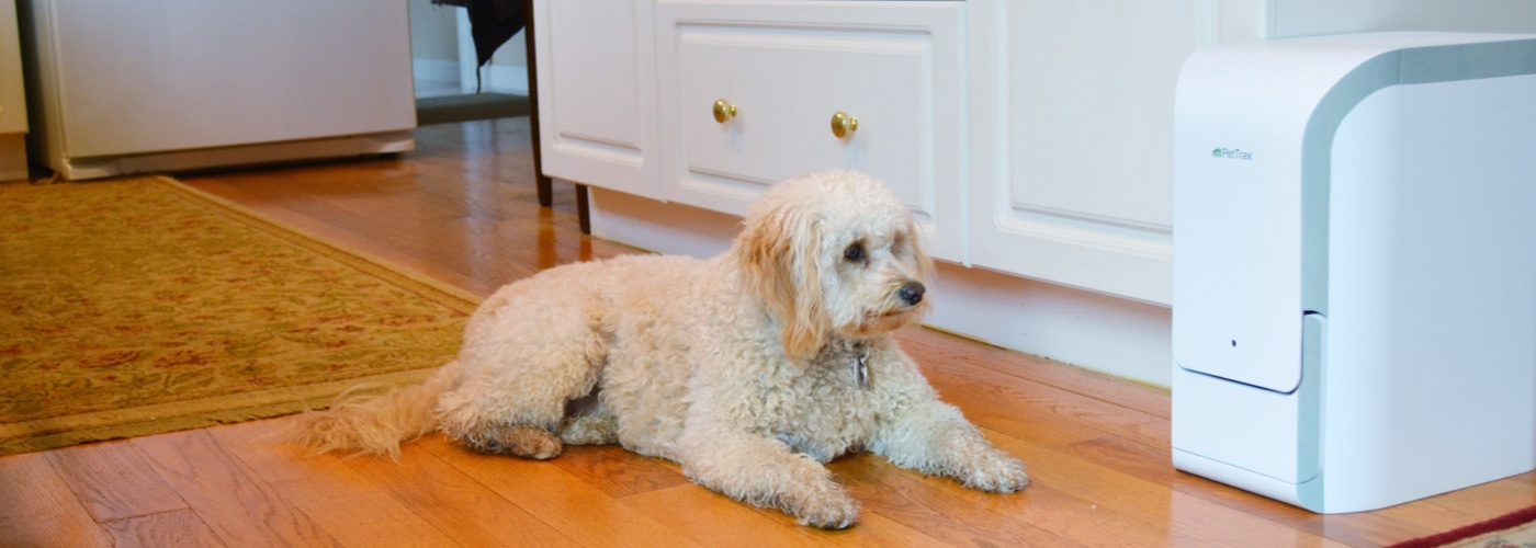 Keeping Your Pets Fit and Healthy