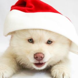 6 Pet Safety Tips for the Holidays