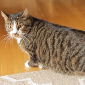 Pet Obesity – help us make it a thing of the past