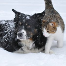 6 Winter Safety Tips for Pets