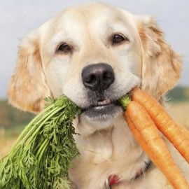 Pet nutrition advice for your large and small breed dogs