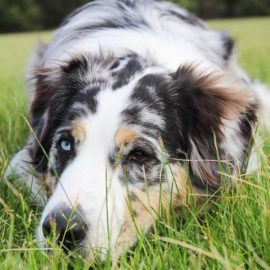 How To Identify a Stressed Dog and De-Stress Him