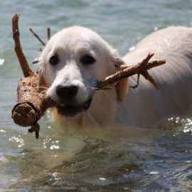 Make Pet Safety a Priority During the Summer