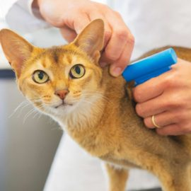 Pet microchips and ID tags will protect your cats and dogs