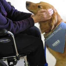 Therapy Animals – Bringing Smiles to People Everywhere