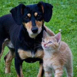 Cats vs Dogs – Is a pet in your future?