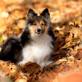 5 Tips for Pet Safety this Fall