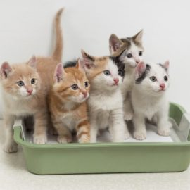 Litter Box Options – From Basic to Automatic