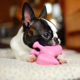 Dog Games – Fun ways to play with your dog at home
