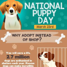 National Puppy Day – Remember, Adopt… Don't Shop!