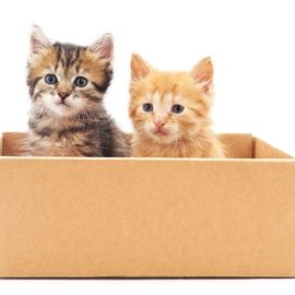 Adopting Cats – Essential Things to Know