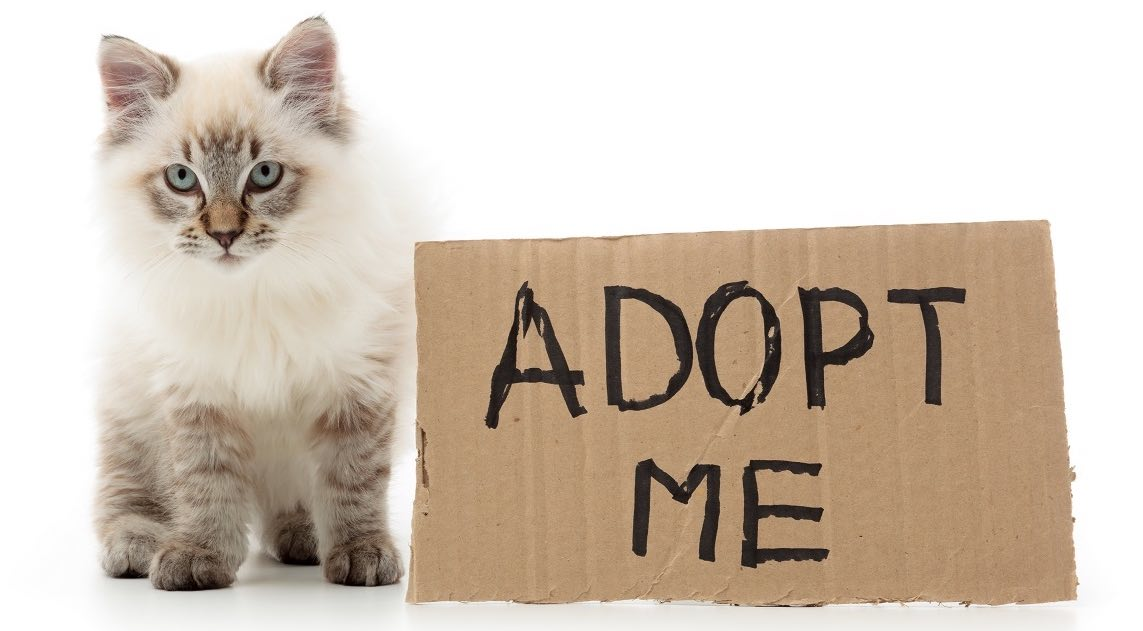 where to adopt kittens pets world