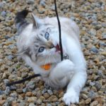10 Fun Things to do with your Cat