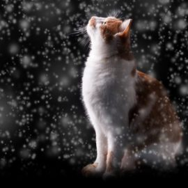 5 Tips To Keep Your Cats Warm All Winter Long