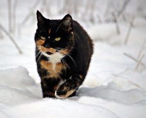 cats winter