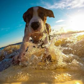 Pet Safety During The Summer Months