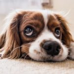 5 Reasons Owning a Pet Camera Will Change Your Life