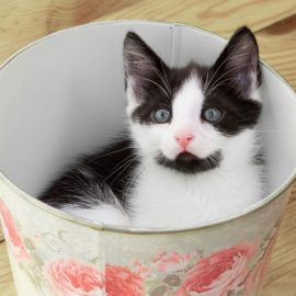 Tips For Bringing Home A New Cat