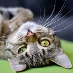4 Tips for Your Lazy Cat
