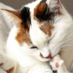 Affordable Pet Clean-up Tips