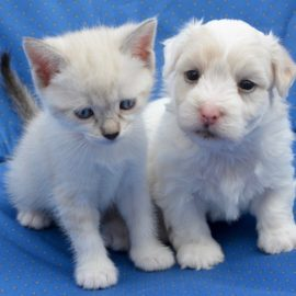 Tips for First Time Pet Owners