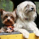 Nutrition Tips When Traveling With Your Dog