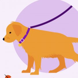 How to Leash Train Your New Puppy
