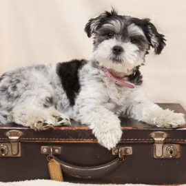Puppy Plane Travel Checklist